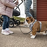 Get Your Puppy a Harness