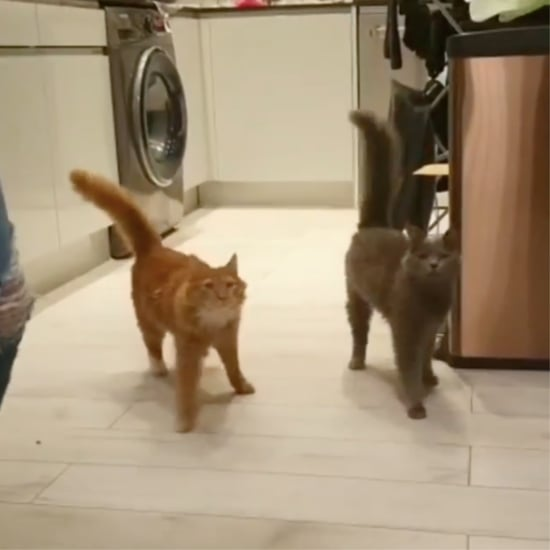 "Video of Cats With Disabilities ""Marching"" to Dinner"