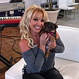 Britney Spears got a new puppy and named her Hannah. Source: Facebook user Britney Spears