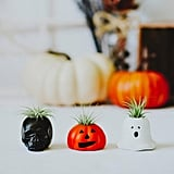 Halloween Air Plant Assortment