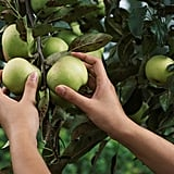 Pick fruit from a farm, and find recipes to cook the fruit.