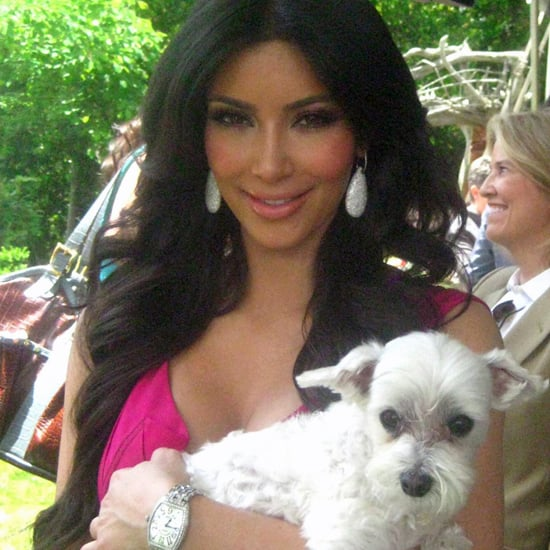Guinness World Record For Dog Photographed With Celebrities