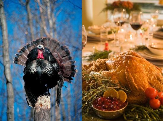 Do Animal Lovers Eat Turkey?