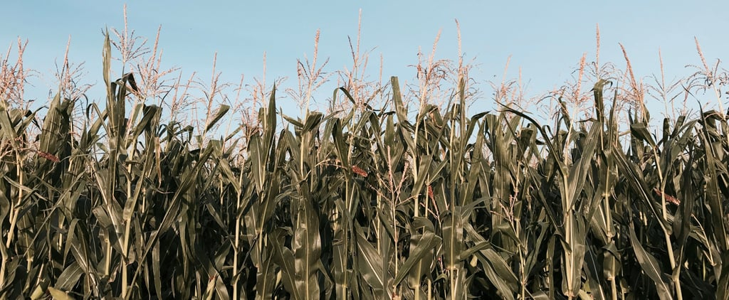 7 of the Scariest Corn Mazes in America