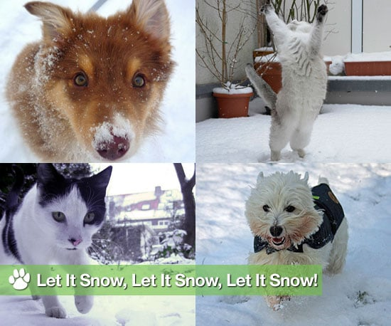 Pictures of Dogs and Cats in Snow