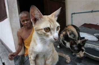 Pets Abandoned in Thai Temple