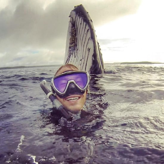 Australian Takes Selfie With a Humpback Whale