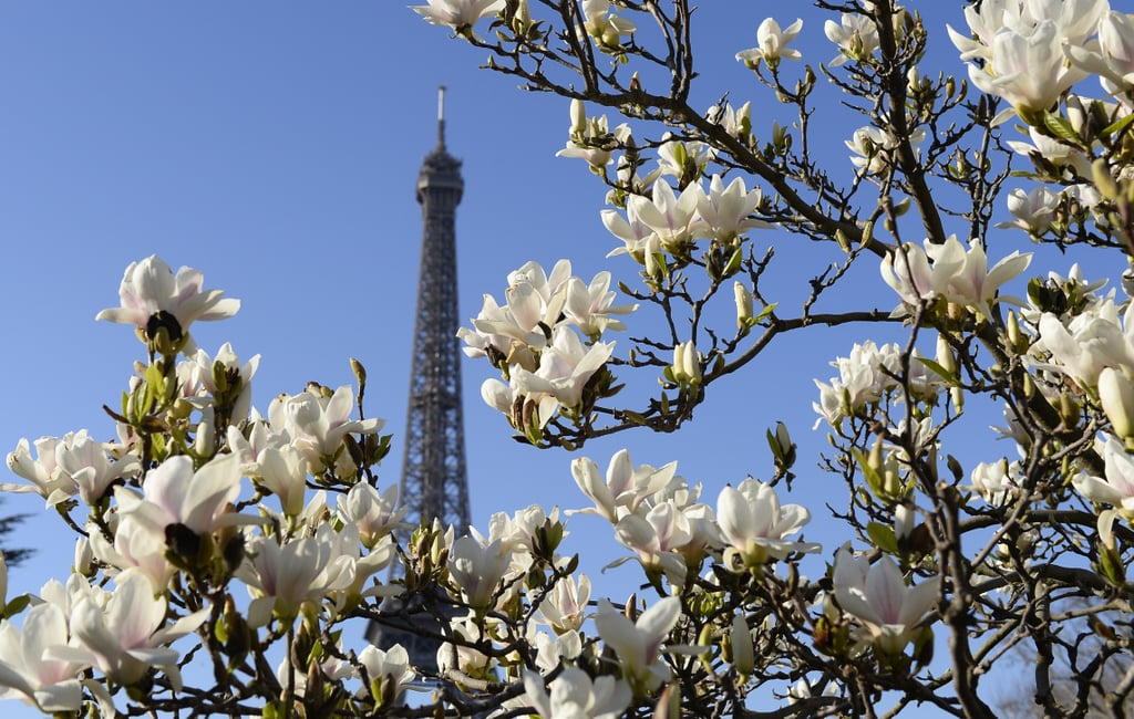 Flowers bloomed around the Eiffel Tower in Paris.