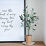 Olive Tree Topiary