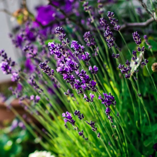 How to Make an Aromatherapy Garden