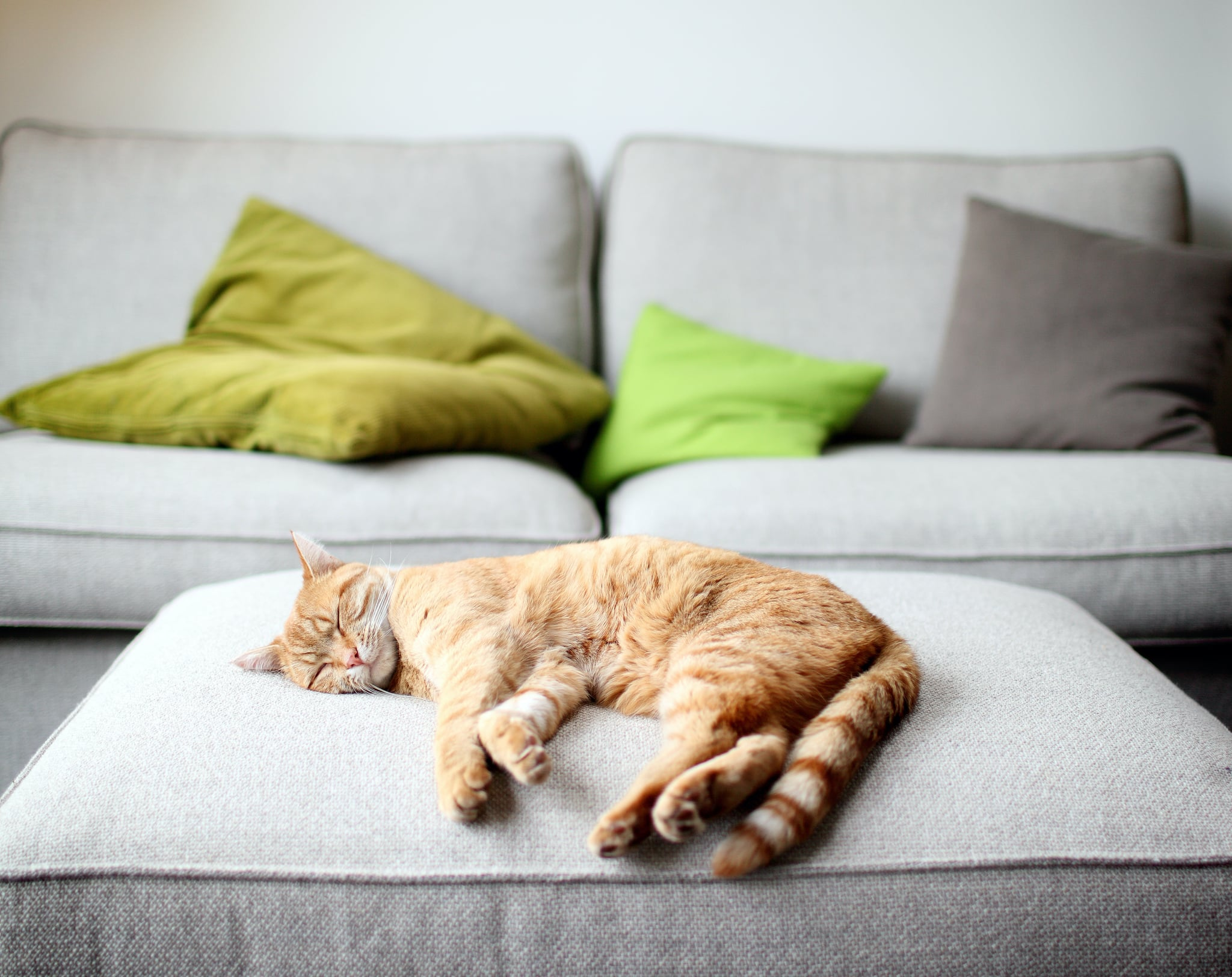 Why Cats Twitch in Their Sleep