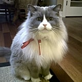 Editorial Intern Katy Quigg's Ragdoll cat, Baby, looked dapper with a bow fastened to his collar.