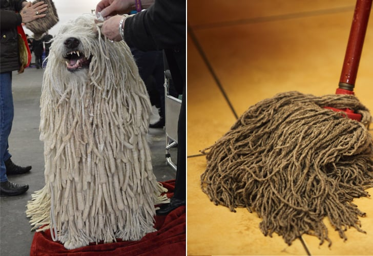 A dog that looks like a mop - YouTube