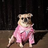 Pink Ladies Jacket Dog Halloween Costume