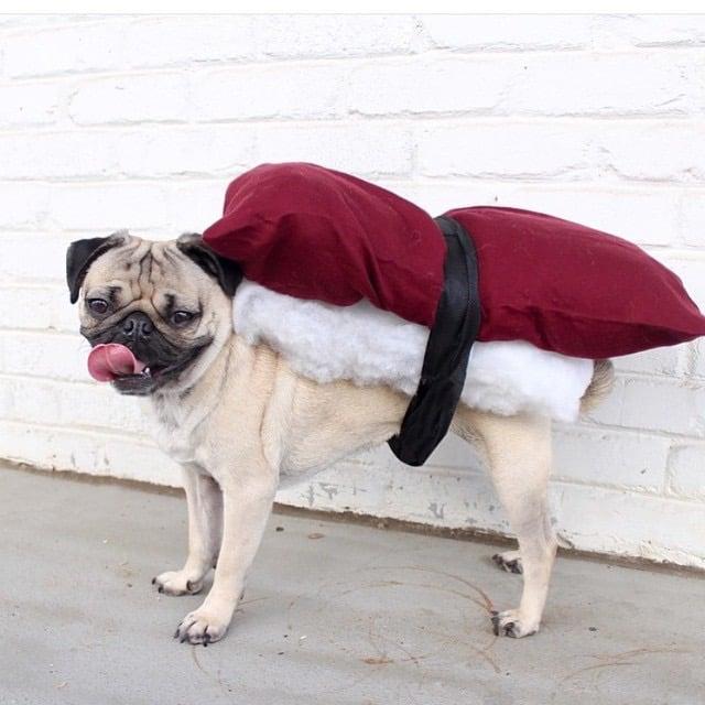 Diy dog costumes popsugar smart living solutioingenieria Image collections