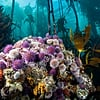23 Photos From Planet Earth: Blue Planet II That Will Remind You to Give Props to Mother Nature