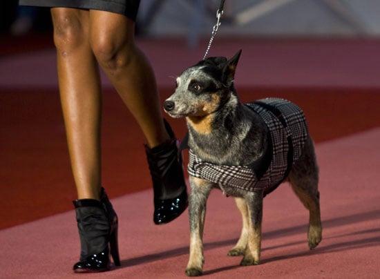 In the Spotlight: Cani di Lusso Pet Fashion Show in Mexico City