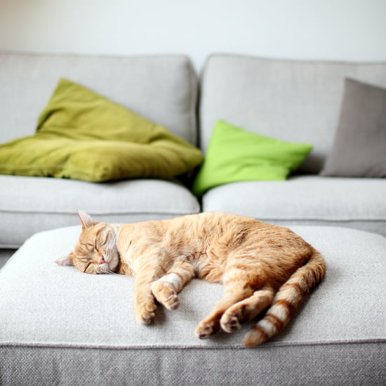 Why Does My Cat Twitch in Its Sleep?
