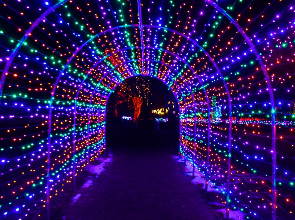 Superb Blossoms Of Light At The Denver Botanic Gardens In Denver, CO Photo Gallery