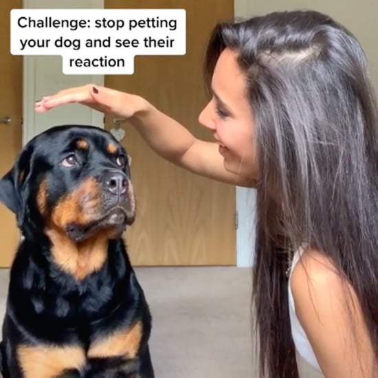 Watch How These Pets React When Their Owners Stop Petting