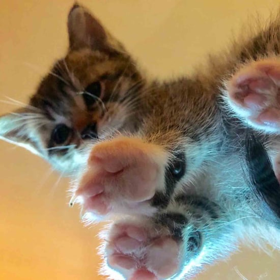 Photos of Cats on Glass