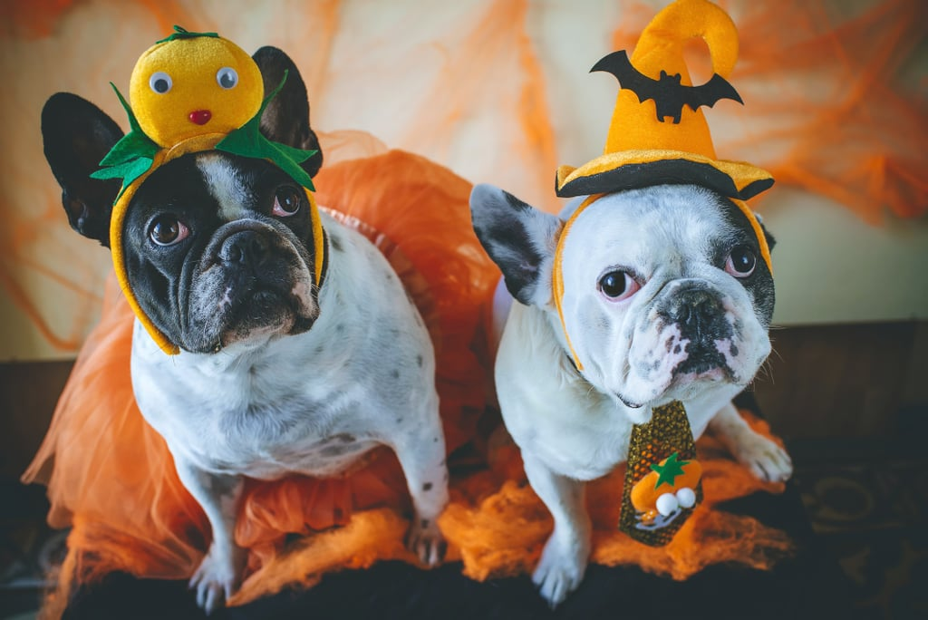 Kmart Is Selling $7 Halloween Costumes For Pets and They Are a Treat