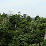 Photos of Amazon Rainforest