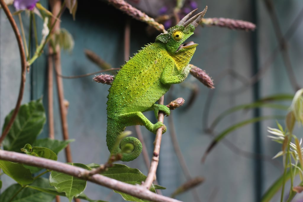 Chameleons camouflage to blend in.
