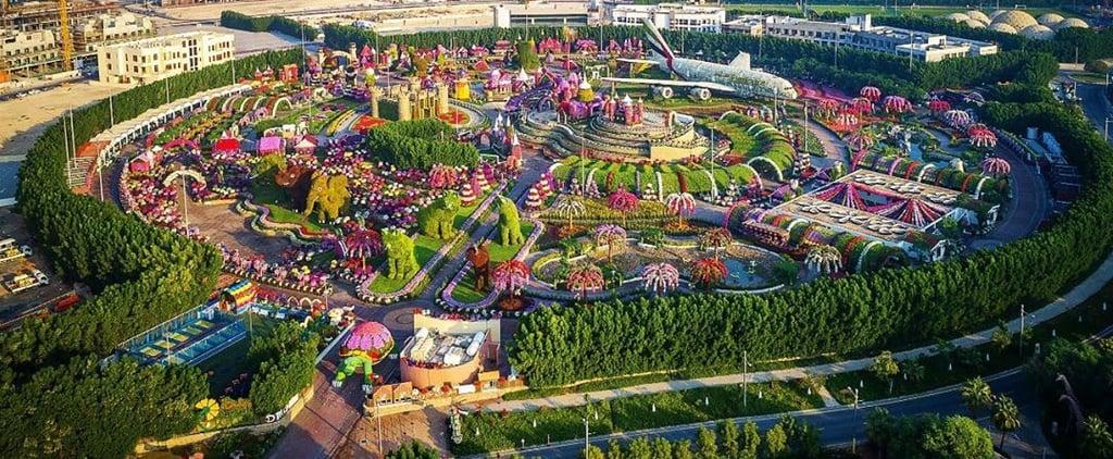 دبي ميراكل جاردن تفتح أبوابها لاستقبال الزوار 2019