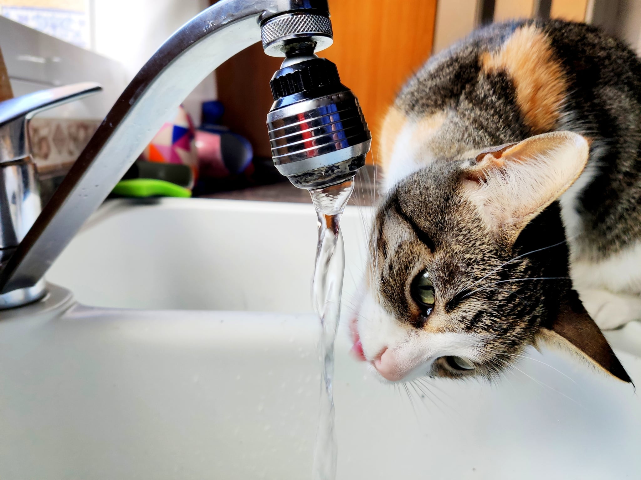 Cat drinking in the kitchen faucet of a family home