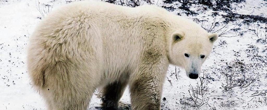 Obama Bans Arctic Oil Drilling | Video