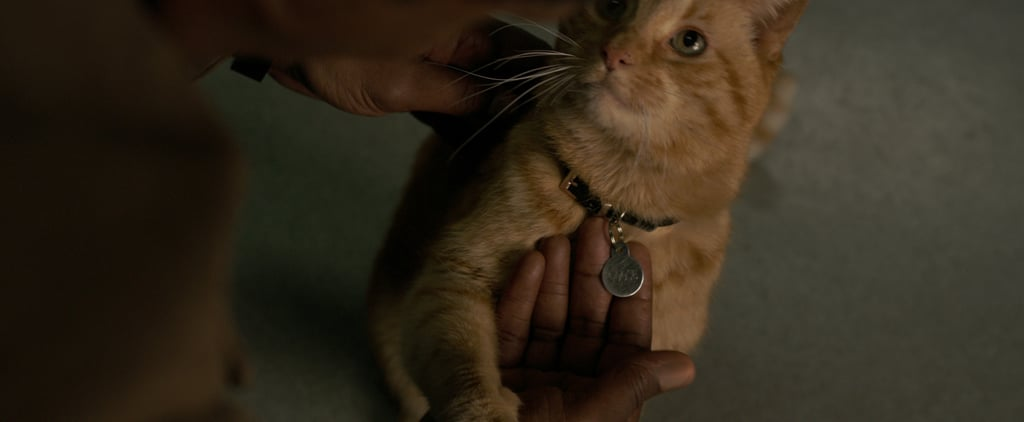 What Is a Flerken in Captain Marvel?