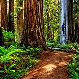 California's Redwood Coast
