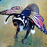 Dressed Up as a Butterfly