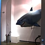 Bruce, the vegetarian shark from Finding Nemo ran into a bit of trouble getting through customs into Canada. It's not every day a life-size, animated shark is shipped across borders.   Images courtesy of Pixar