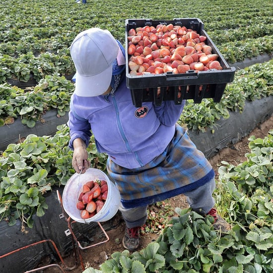 Thanksgiving: Farmworkers Are the Holiday's Unsung Heroes