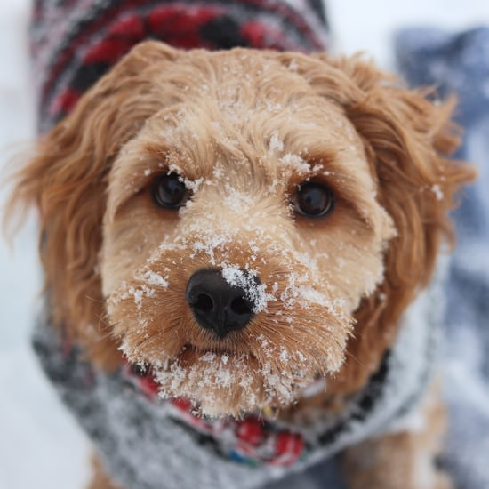 How Can I Tell If My Dog Is Cold?