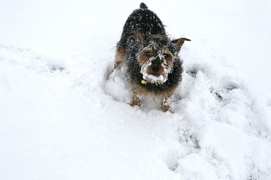 Me, eat snow? Why do you ask?  Source: Flickr user Bill Hails