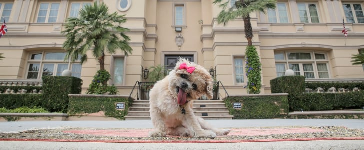 You Have to Check Out Marnie the Dog's Lavish LA Airbnb