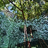 Cuba's Coral Reefs