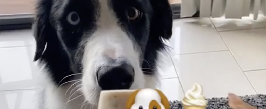 Easy Dog-Friendly Ice Cream Recipe | TikTok Video