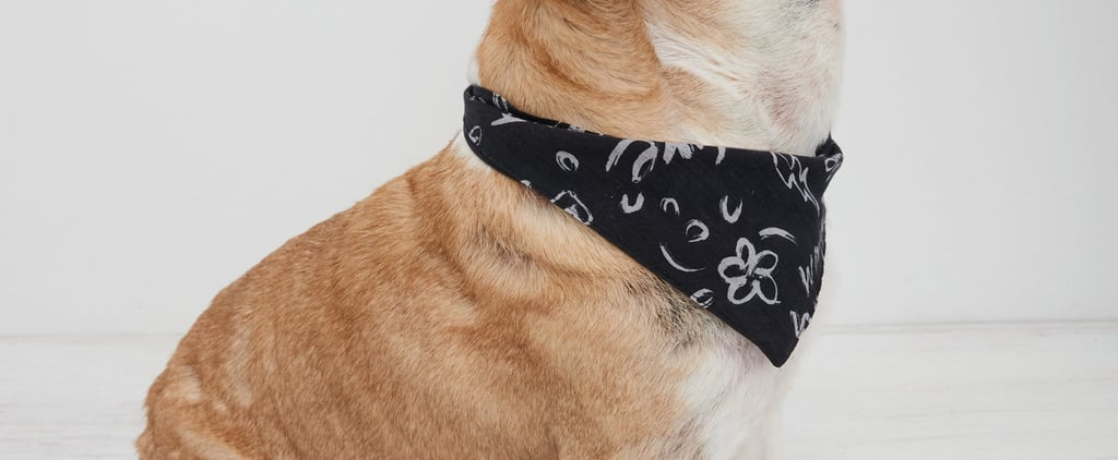 American Eagle Has the Cutest Dog Clothes and Bandanas