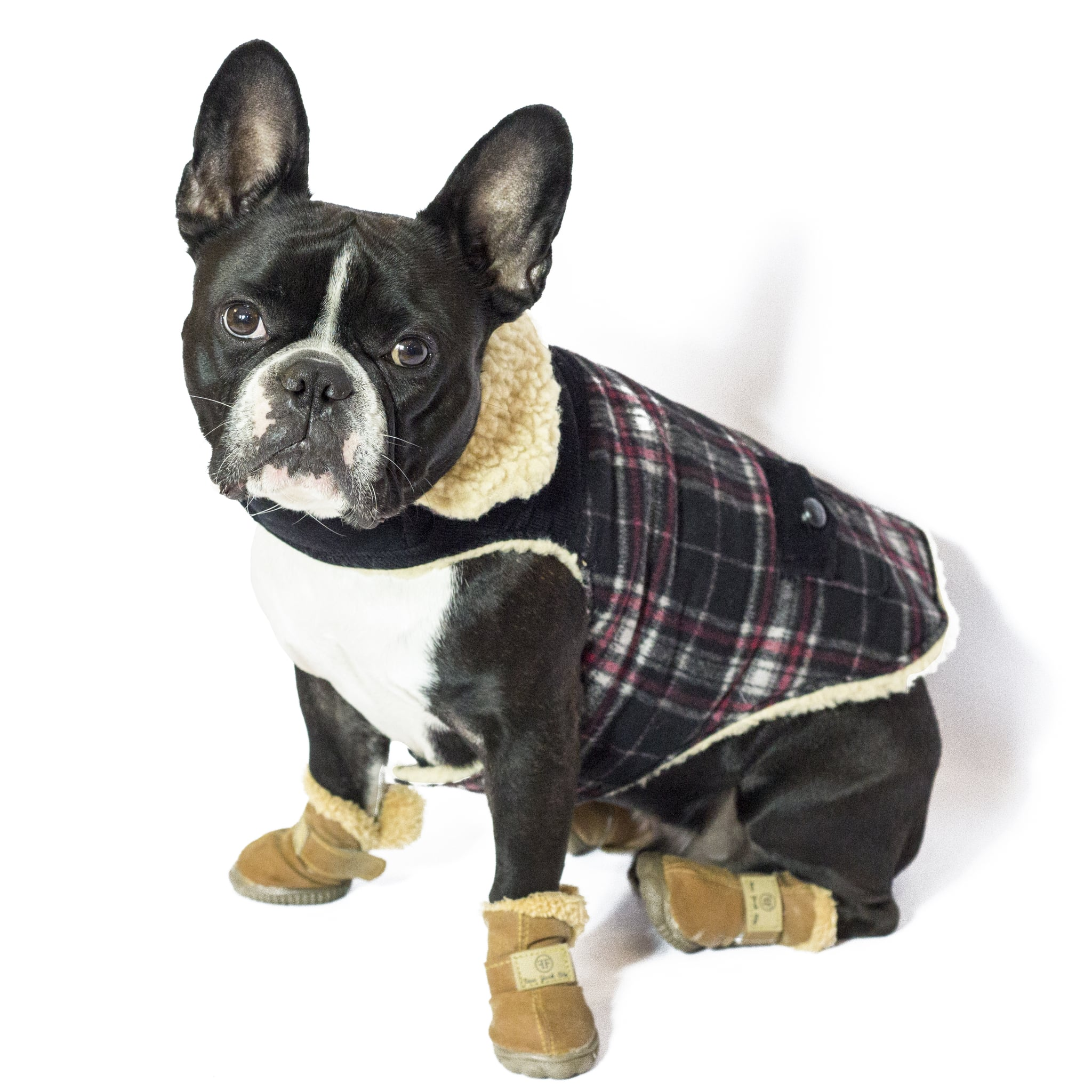 Boston Terrier Dressed As Pig Bottle Opener Fridge Magnet