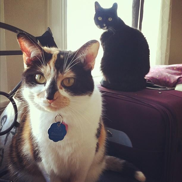 Senior Copy Editor Mary White's cats, tuxedo Diesel and calico Lily, don't always get along.