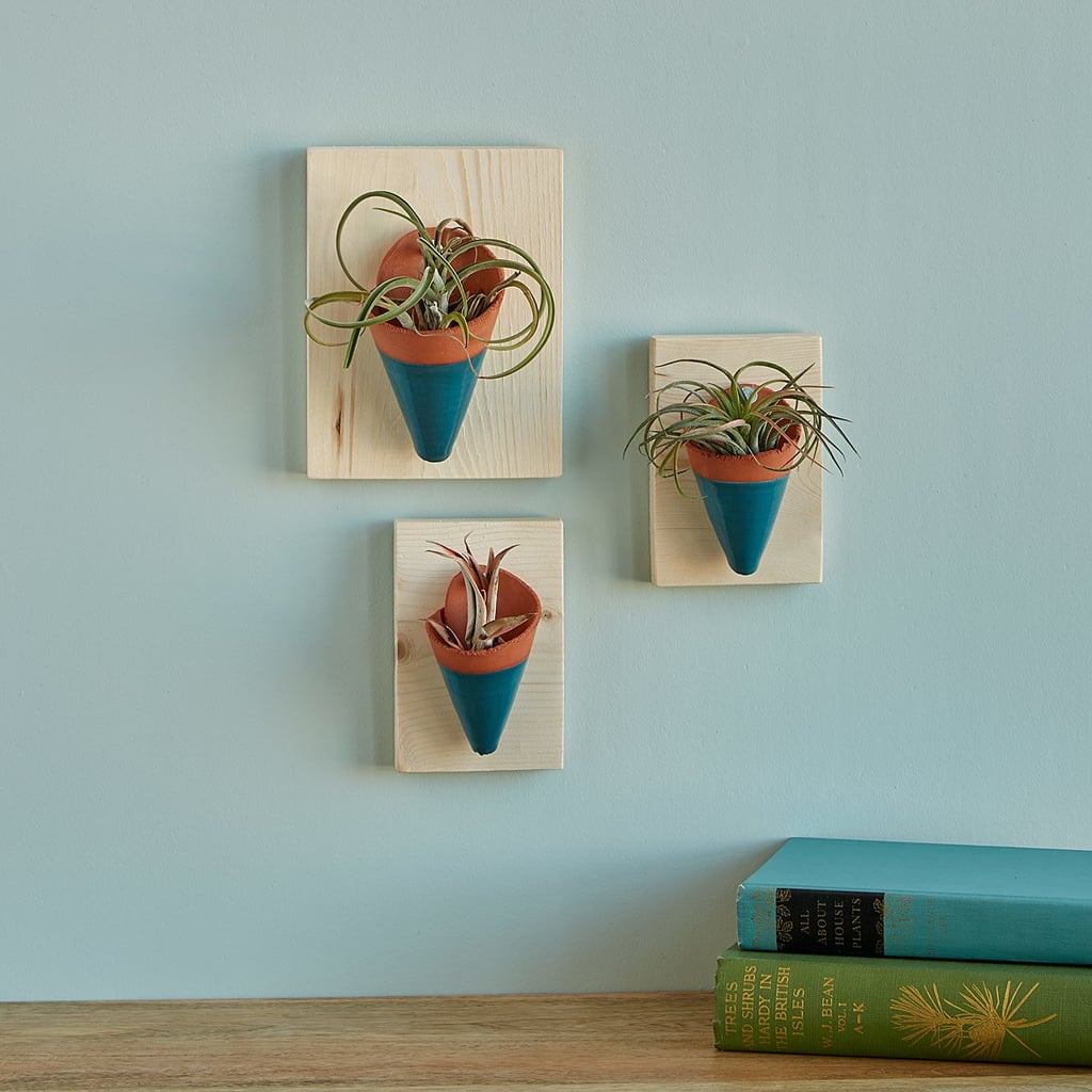 Air Plant Wall Sconces