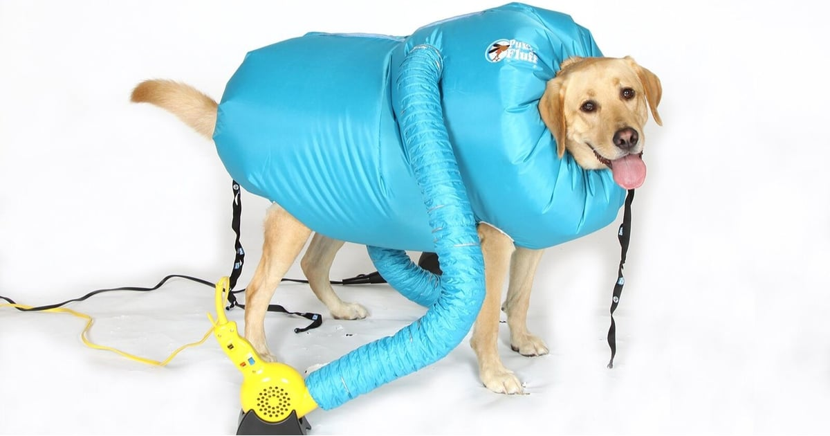This Inflatable Jacket Vacuum Dries Your Dog When They're Wet, and OMG — This Is Coming Home With Me Now