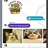 And you can instantly search important images (like a cute cat) to make your conversation even more personal.