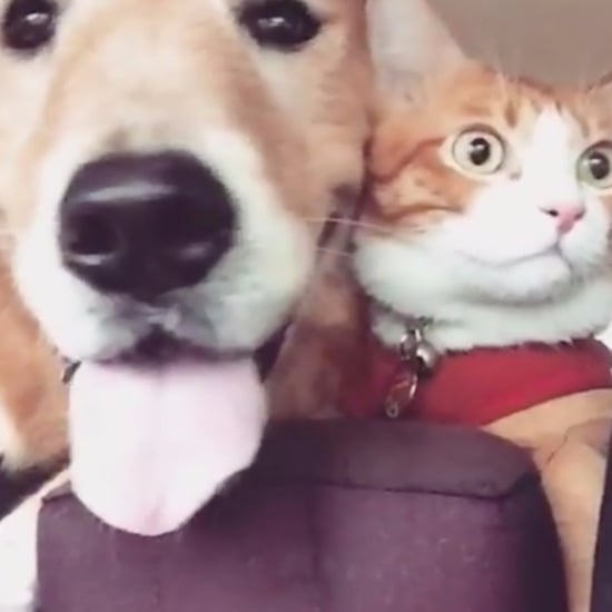 Cat and Dog Car Ride Video