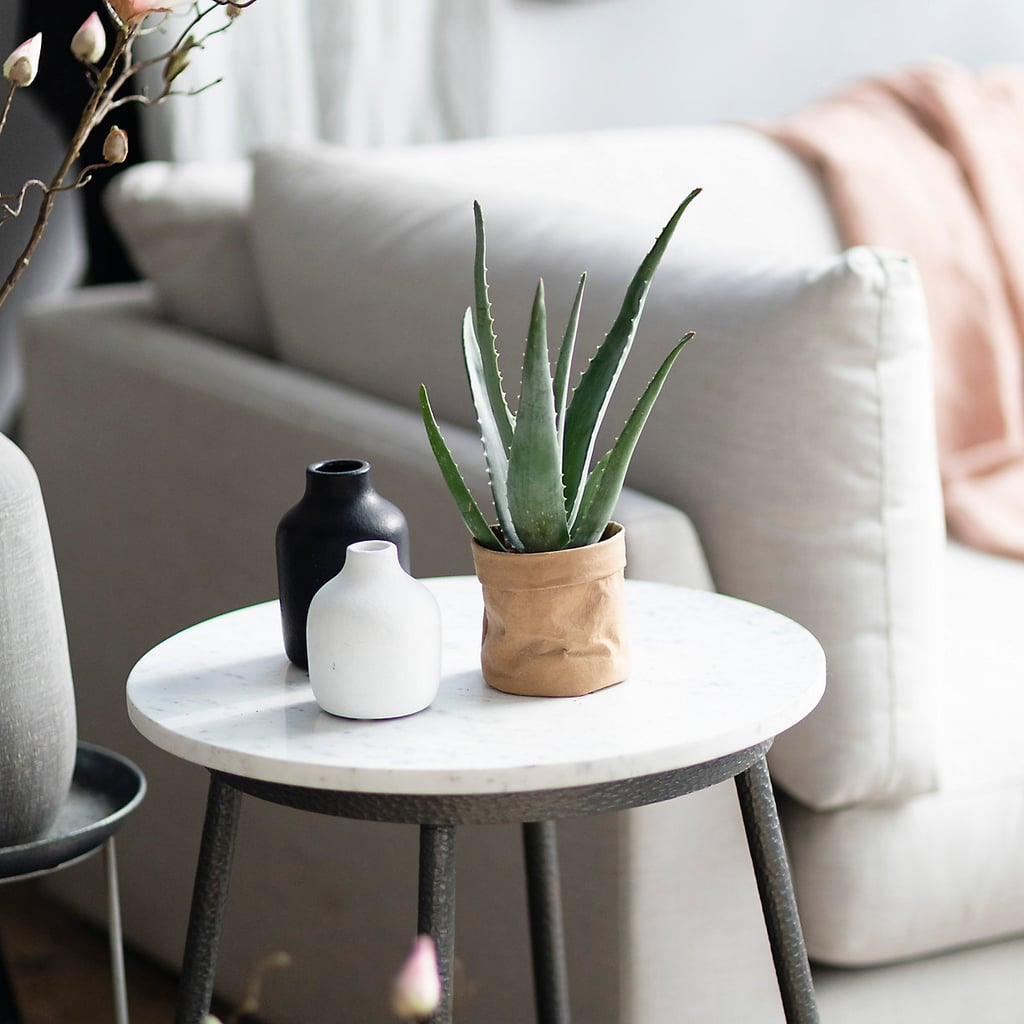 Aloe Plant in Kraft Paper Pot