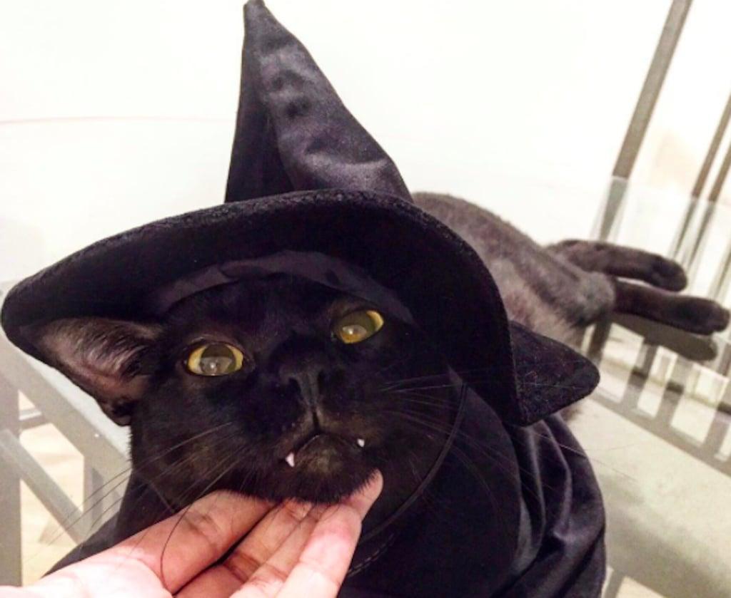 Vampire Cat From Instagram